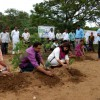Tree plantation celebrated as Monsoon festival