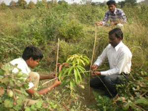 Agri-Horti-Forestry